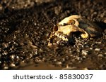 Real human skull before sunset, figured as crime scene, narrow focus, focused on teeth - stock photo
