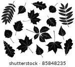 set of silhouettes of leaves....