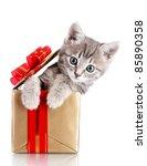 Stock photo funny kitten in golden gift box isolated on white 85890358
