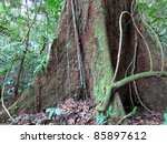 Tree Roots And Dense Vegetatio...