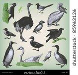 Engraving Vintage Bird Set Fro...
