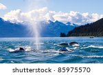 Humpaback Whales Playing In Th...