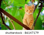 Stock photo young red cat kitten sitting on branch outdoor shot at sunny day 86147179