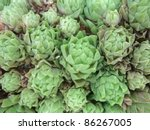 abstract full frame detail of a succulent plant in sunny ambiance - stock photo