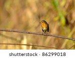european robin redbreast   Shutterstock . vector #86299018