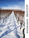 Vineyard at winter. Rhine valley, Germany - stock photo