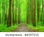 green forest background in... | Shutterstock . vector #86537215