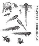 evolution or development stage... | Shutterstock .eps vector #86652412