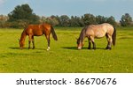 Horses Grazing In Grassland Of...