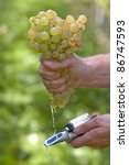 Vintner Measures The Sugar Content of Grapes With A Refractometer - stock photo