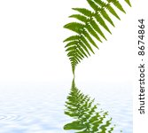 One Green Fern Leaf With...