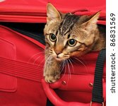 Stock photo kitten in a suitcase 86831569