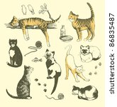 Vector  Set Of Hand Drawn Cats.