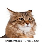 Portrait of pretty young cat over white background - stock photo
