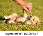 Stock photo puppies playing in grass 87029687