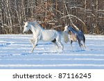 two horses in winter field   Shutterstock . vector #87116245