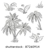 palm trees  flowers and grass ... | Shutterstock .eps vector #87260914