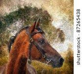 Arabian  Horse Portrait....