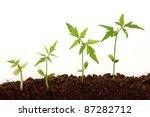 plants growing from soil   Shutterstock . vector #87282712