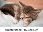 Stock photo the grey kitten sleeps 87328669