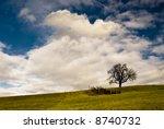 lonely tree on green field on...   Shutterstock . vector #8740732