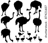 Vector Ostrich Silhouettes