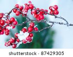 Snowy Branch With Red Berries...