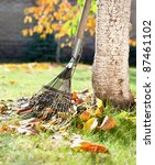 A Rake And Autumn Leaves In A...