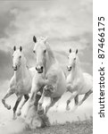 White Stallions In Dust Over A...