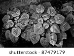Black and white foliage - stock photo