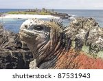 Iguanas On Floriana Island ...