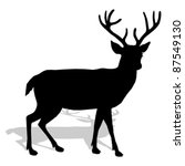 Animal   Deer  Vector