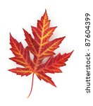 vivid autumn maple leaf... | Shutterstock . vector #87604399