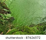 waterside detail of a small green overgrown tarn, seen from above - stock photo