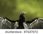 a closeup picture of a...   Shutterstock . vector #87637072