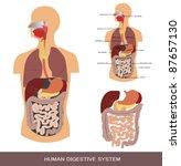 digestive system  detailed... | Shutterstock .eps vector #87657130
