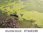 Algae Polluted Water