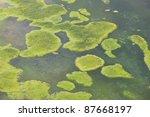 Algae Floating In Polluted Water