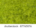 natural background of a abstract organic slimy substance with algae and small bubbles - stock photo