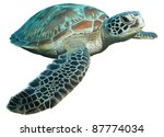 Stock photo green turtle chelonia mydas isolated on a white background 87774034