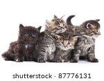 Stock photo siberian kitten on white background 87776131