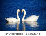 a couple of swans symbolizing... | Shutterstock . vector #87803146