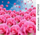 Pink Rose Rain Drop From Sky