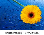 Bright  Wet And Yellow Flower...