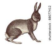 Hare   Vintage Engraved...
