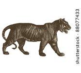Tiger   Vintage Engraved...