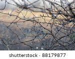 wet twigs and roll-off water drops in Scotland - stock photo
