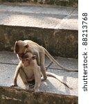 Funny Monkey  (Macaca fascicularis) at khao wang ,Petchburi Thailand - stock photo