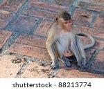 Monkey (Macaca fascicularis) at khao wang ,Petchburi Thailand - stock photo