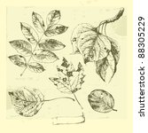 botanical set  vintage highly... | Shutterstock .eps vector #88305229